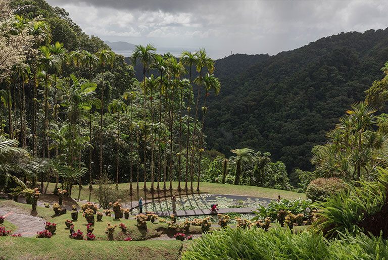 Martinique - An Enchanting Garden